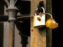 lockflower-1126249-m
